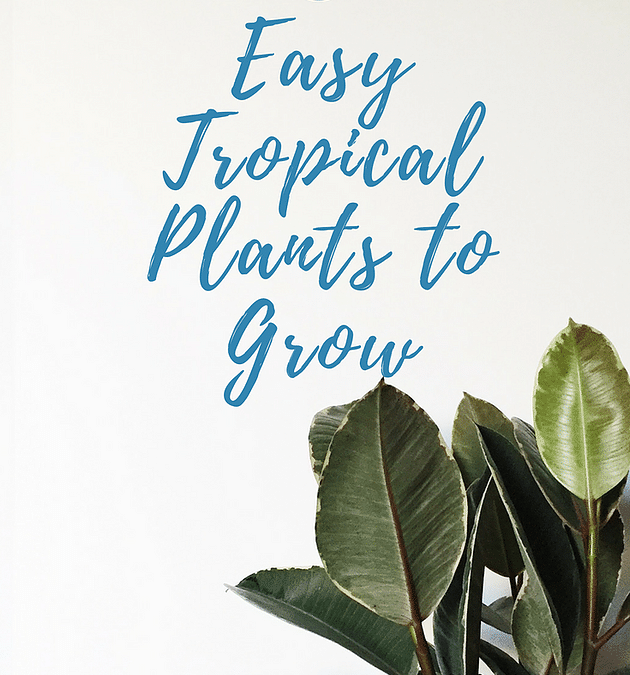 5 Easiest Tropical Plants to Grow Indoors