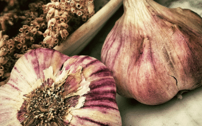 3 Simple Tips to Planting Garlic