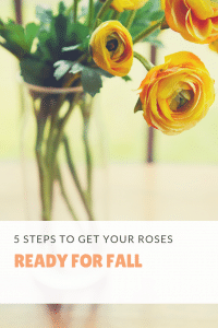 5 steps to get your roses ready for fall