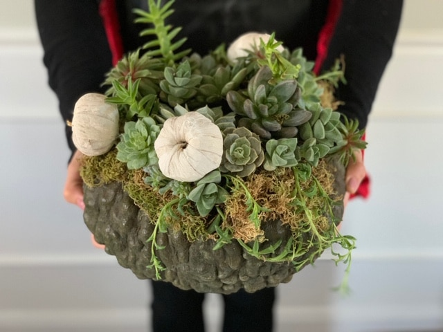 How to Make a Pumpkin Succulent Centerpiece