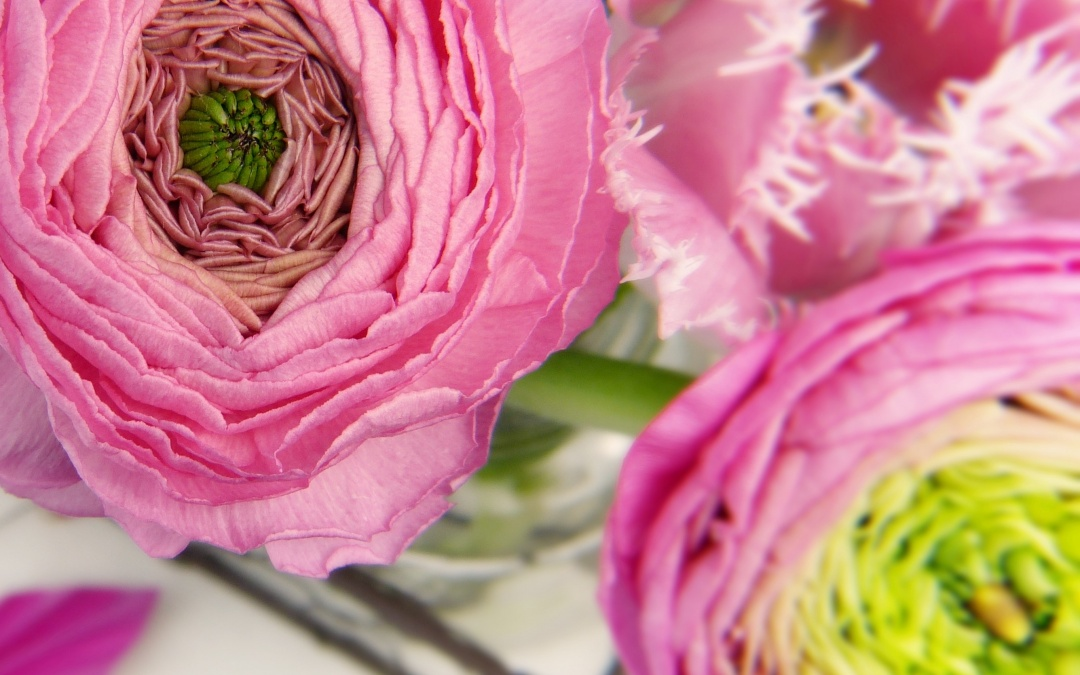 5 Things To Know Before Planting Ranunculus