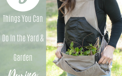 5 Things To Do In The Yard & Garden During Quarantine