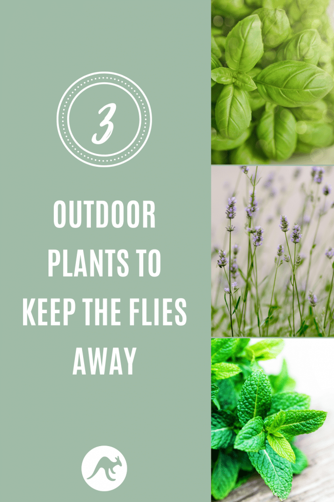 plants to keep flies away