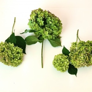 how to dry hydrangea