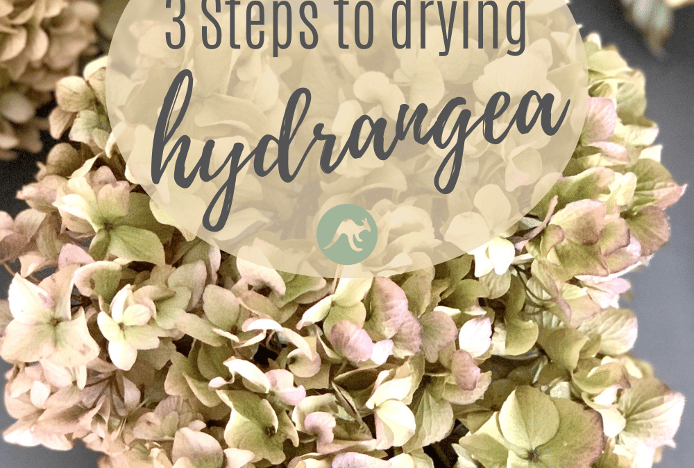 3 Steps To Drying Hydrangea