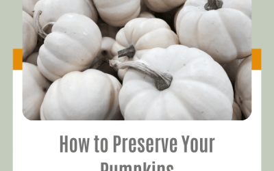 How to Preserve Your Pumpkins   3 Simple Steps