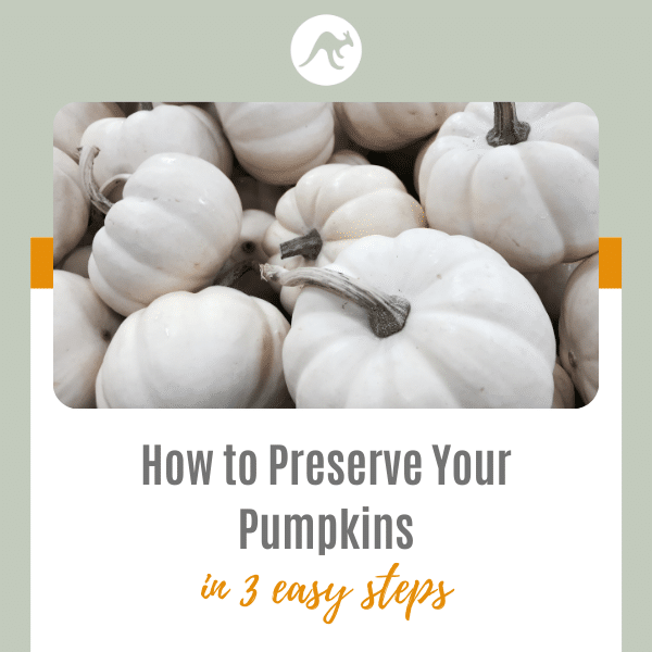 How to Preserve Your Pumpkins | 3 Simple Steps